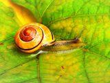 Snail Farm мнения
