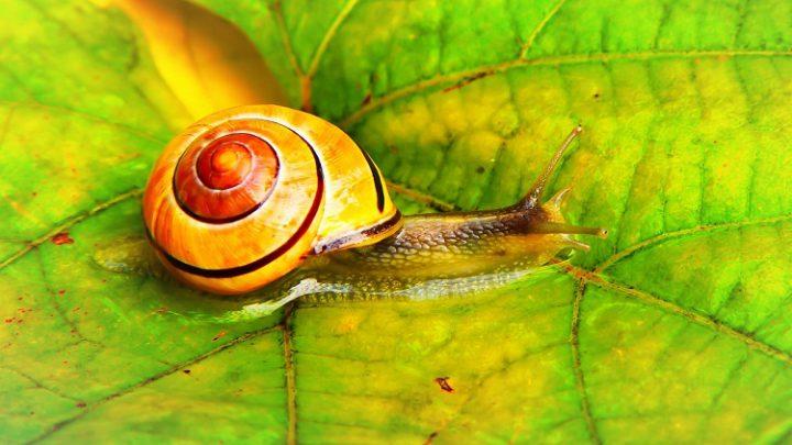 Snail Farm – мнения, съставки, къде да купя, форум